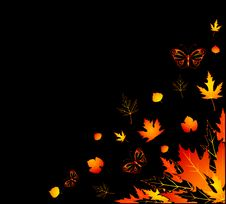 Free Autumnal Leaves. Royalty Free Stock Photo - 16757765