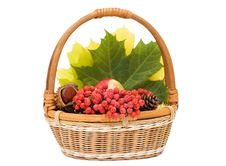 Free Autumn Leaves And Fruits In Basket Royalty Free Stock Image - 16757886