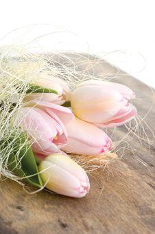 Free Pink Tulips Royalty Free Stock Photo - 16759815