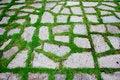 Free Green Pattern Walkway-2 Royalty Free Stock Images - 16760909