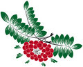 Free Rowan-berry (Sorbus Aucuparia) Royalty Free Stock Images - 16767449