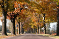 Free Avenue Of Trees Across Royalty Free Stock Photo - 16768745