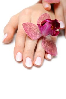 Free Beautiful Hand With Perfect Nail Pink Manicure Stock Photo - 16760380