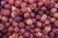 Free Apples Stock Photos - 16760673