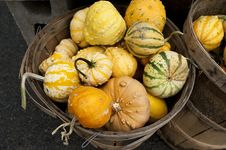 Free Basket Of Gourds Stock Photography - 16760682