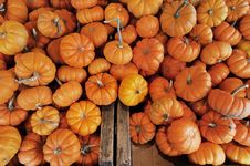 Free Mini Pumpkins Stock Images - 16760724