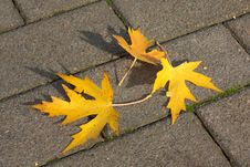 Free Autumn Leaves On Pavement Royalty Free Stock Photography - 16761047
