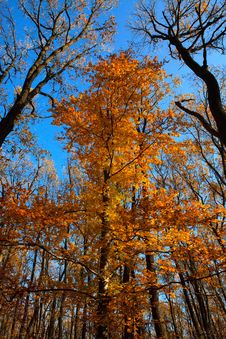 Free Tree In The Autumn Forest Stock Photos - 16761333