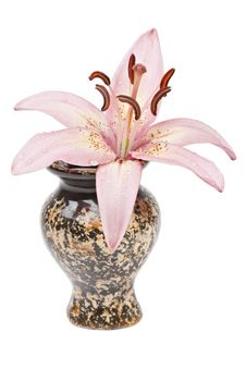 Free Lily In A Ceramic Vase Royalty Free Stock Photos - 16761858