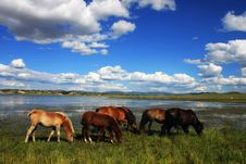 Free Horses On The Meadow Royalty Free Stock Photos - 16762378