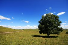 Free Tree On The Meadow Stock Image - 16762381