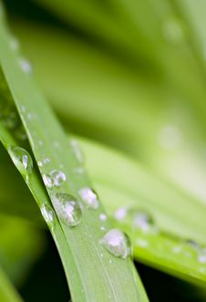 Free Shallow Focus Of Water Droplets On Royalty Free Stock Images - 16762639