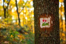 Tourist Sign On The Oak Tree In The Autumn Forest Stock Photography