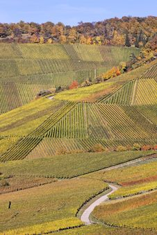 Vineyard - The Autumn Season Stock Photos