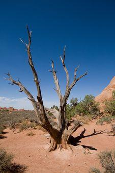 Free Dead Tree Stock Photography - 16764712