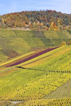 Vineyard - The Autumn Season Stock Images