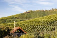Free Vineyard And Hause Stock Image - 16765011