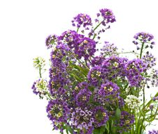 Free Flowers Royalty Free Stock Photography - 16765747