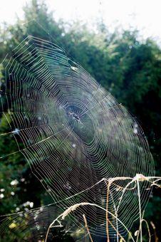 Free Close-up Cobweb View Royalty Free Stock Photo - 16765825