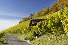 Free Vineyard And A Way Royalty Free Stock Photography - 16765827
