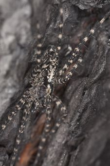 Free Wolf Spider On Burnt Coal Stock Photo - 16766200