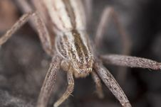 Free Hunting Spider Camouflaged On Wood Stock Photography - 16766342