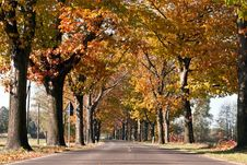 Free Avenue Of Trees Across Royalty Free Stock Photo - 16768745