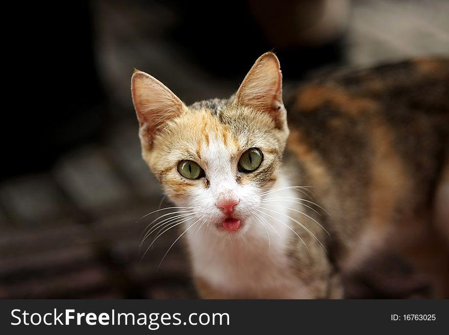 Feral kitten tongue