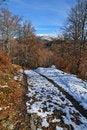 Free Road To Autumn Beechen Wood Royalty Free Stock Photo - 16773805