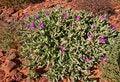 Free Australian Bush Royalty Free Stock Image - 16779286