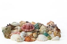 Free Sea Shells Arranged On Isolating Background Royalty Free Stock Images - 16771349