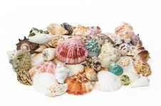 Free Sea Shells Arranged On Isolating Background Stock Images - 16771374