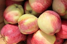 Free Basket Of Apples Royalty Free Stock Photo - 16772145