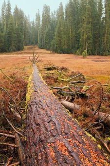 Free Fallen Giant Tree Stock Image - 16772691