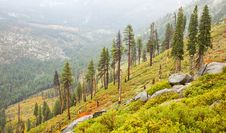 Free Sparse Yosemite Forest Royalty Free Stock Photography - 16772707