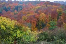 Free Autumn Woodland Colors Stock Images - 16773774