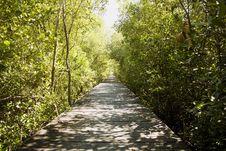 Free Wooden Bridge Stock Photo - 16776010