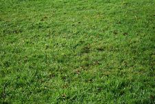 Free Grass Stock Photos - 16778203
