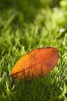 Free Single Autumn Leaf Royalty Free Stock Photos - 16778238