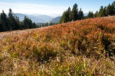 Free Black Forest - In The Mountains Royalty Free Stock Photo - 16778495