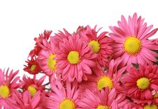 Free Autumn Flowers Stock Images - 16778854