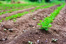 Free Trees Are Grown. Royalty Free Stock Photography - 16779097