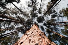 Free View In Tree Crown Stock Photography - 16779242