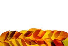 Free Autumn Leaves Stock Photos - 16779523