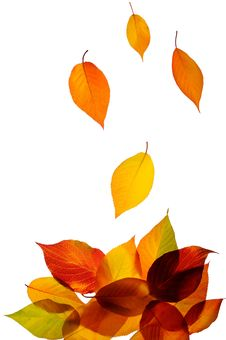 Free Autumn Leaves Royalty Free Stock Images - 16779529
