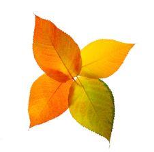Free Autumn Leaves Stock Photos - 16779543