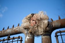 Free Burned, Pierced Doll Head Stock Photos - 16779933