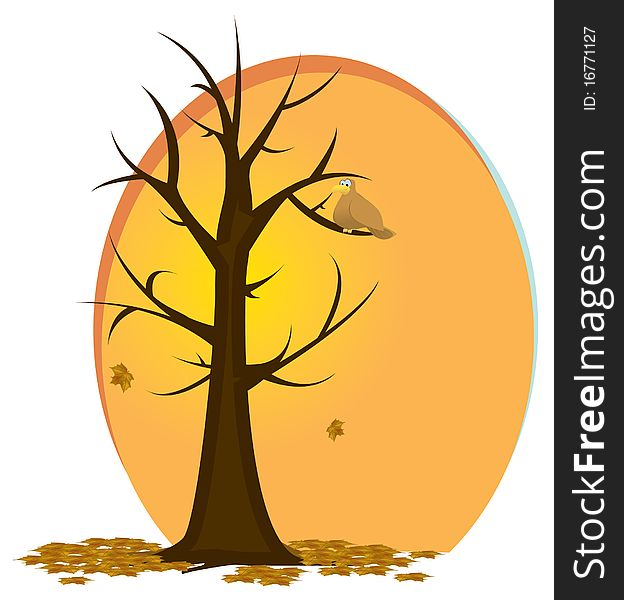 Fall/Autumn Tree