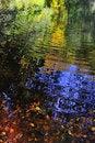 Free Autumn Leaves Stock Photos - 16784273