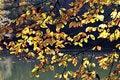 Free Autumn Leaves Royalty Free Stock Photo - 16784715